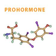 Prohormoon